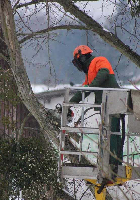 przycinanie drzew dźwigiem